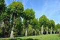 Schleswig-Holstein, Haseldorf, Naturdenkmal 24-02 NIK 4148.JPG