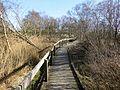 Schwimmendes Moor, bei Sehestedt, Jadebusen. Bohlenweg zur Beobachtungshütte.jpg