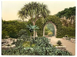 Tresco Abbey Gardens - The arch from the wall of the mediæval monastery. Photo from ca. 1890 to 1900.