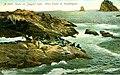 Seals on Jagged Islet, 1907 (WASTATE 1374).jpeg
