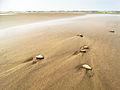 Seashells (14679533608).jpg
