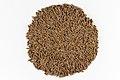 Seeds of Cumin.jpg