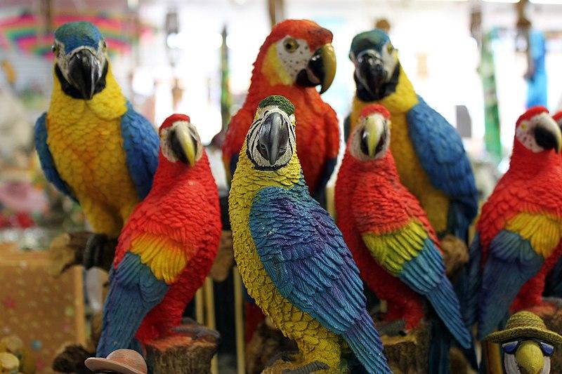 File:Sentinel parrots.jpg