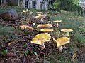 September Morning in Monmouth Junction, New Jersey. September 28,2008 - panoramio.jpg