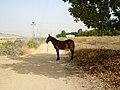 Sevilla - Castilblanco de los Arroyos (7734085776).jpg