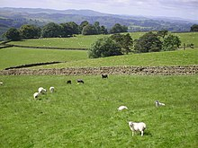 Goat - Wikiquote