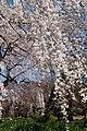 Shinjuku Garden (5652454514).jpg