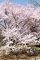 Shinjuku Garden (5652458800).jpg