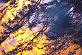 Situace Ladislav Kopunec Photo original Situation Natura Law Czech Republic Nature 145287 Art w.jpg