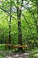 Skulyn Kovelskyi Volynska-Nechymne nature reserve-Rylskyi&Bratun oak.jpg