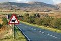 Skye Road Sign Sheep 01.jpg