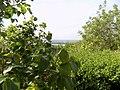Slankamenački Vinogradi, Serbia - panoramio (26).jpg
