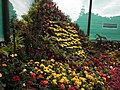 Snap from Lalbagh Flower Show Aug 2013 7890.JPG
