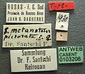 Solenopsis metanotalis picturata casent0103206 label 1.jpg