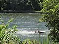 Speedboats on the Waikato River, Hamilton 03.JPG