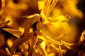 Spring (5606255487).jpg
