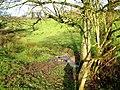 Spring near Cobley - geograph.org.uk - 1081052.jpg