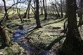 Springtime woods. - geograph.org.uk - 1144444.jpg