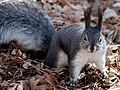 Squirrel-80575.jpg