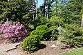 Stanley M. Rowe Arboretum - DSC03318.JPG