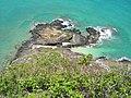 Starr-050419-0452-Panicum fauriei var carteri-habitat-Mokolii-Oahu (24119258113).jpg