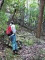 Starr-091127-1532-Aleurites moluccana-habit in gulch with Forest-Olinda-Maui (24873112912).jpg