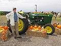 Starr-111004-0565-Cucurbita pepo-habit and pumpkin and tractor display with Kim-Kula Country Farms-Maui (25092020276).jpg