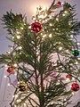 Starr 051204-8566 Cryptomeria japonica.jpg