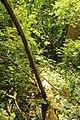 Steenbergse bossen 26.jpg