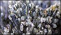 StibineEtQuartzHongrie ProvenanceKaprick RefMGL38890 MuséumHistoireNaturelleLille GLAM2016 Photo.F.Lamiot 3.jpg