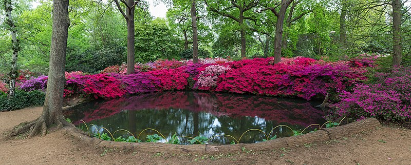 File:Still Pond, Isabella Plantation, Richmond Park, London, UK - Diliff.jpg