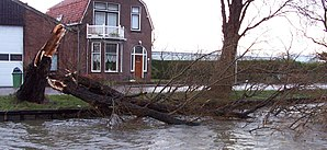 Cyclone Kyrill - Storm damage in Delft, The Netherlands