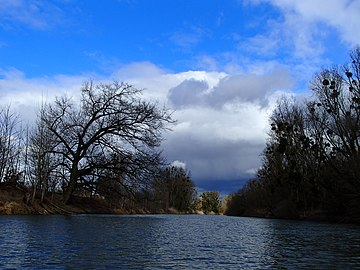 Stormy weather in early spring at old Rhine in the nature reserve Kühkopf-Knoblochsaue.jpg