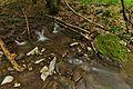 Stužická rieka, Národná prírodná rezervácia Stužica, Národný park Poloniny (05).jpg