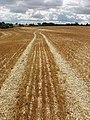 Stubble left after wheat harvest, Podington - geograph.org.uk - 528796.jpg
