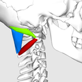 Suboccipital triangle08.png