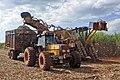 Sugarcane harvest Piracicaba 05 2009 5783.JPG