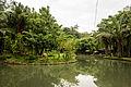Sukorambi Botanical Garden, Jember, 2014-01-20 08.jpg