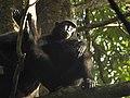 Sulawesi trsr DSCN0370 v1.JPG