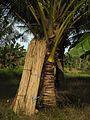 Sulawesi trsr DSCN0976.JPG