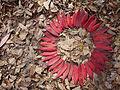 Sumac leaf circle.jpg