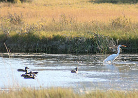 Summer Lake Wildlife Refuge, Oregon (ducks & egret).jpg