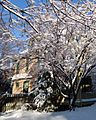 Summit New Jersey house and tree with snow in February.JPG