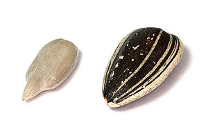 Helianthus annuus - A sunflower seed dehulled (left) and with hull (right)