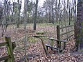 Sunnybank Woods - geograph.org.uk - 1060122.jpg