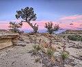 Sunset in Ojito Wilderness, NM.jpg