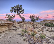 Colorado plateau wikipedia sunset in ojito wilderness near albuquerque nm publicscrutiny Images