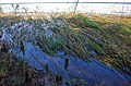Swept Down Grasses (6192345391).jpg