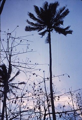 Vanilla production in French Polynesia - Vanilla plants on Tahaa