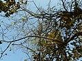 Tambut (Marathi- तांबूट) (3259919557).jpg